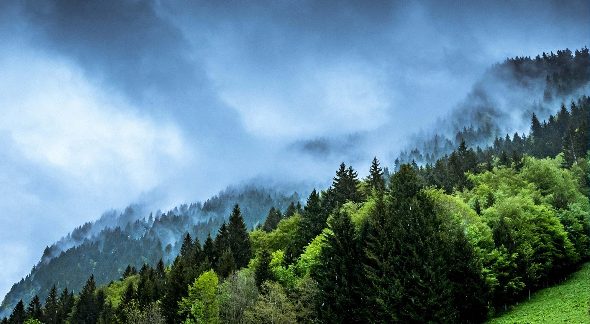 Ecologie verte & écologie bleue